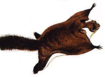 空中写真で散歩する:空飛ぶムササビ