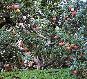 果樹 園 の 地図 記号