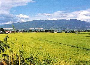 地図記号:田 国土地理院